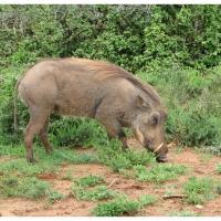 Afrika 2008 - 1.část